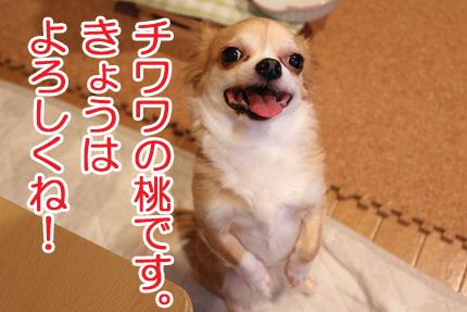 24_05_25_桃