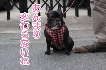 24_06_23_新ハーネス1