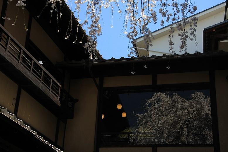 二寧坂(二年坂)桜