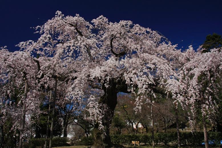 円山公園より、5