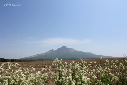 渡島駒ヶ岳の初夏1