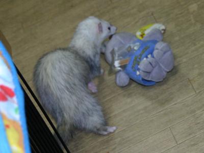 『ウサギさん、いらっしゃい~!』