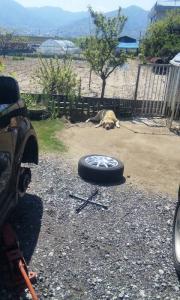 タイヤとさくら