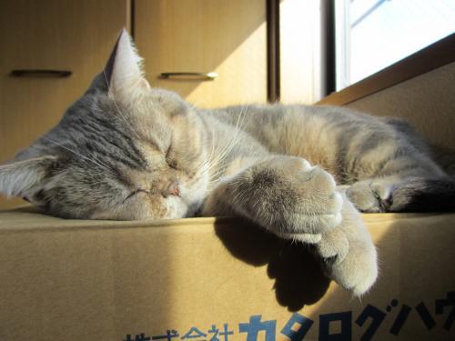 ブログ2011・4・16昼寝