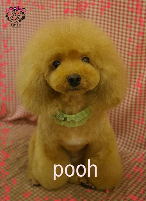 poohちゃん