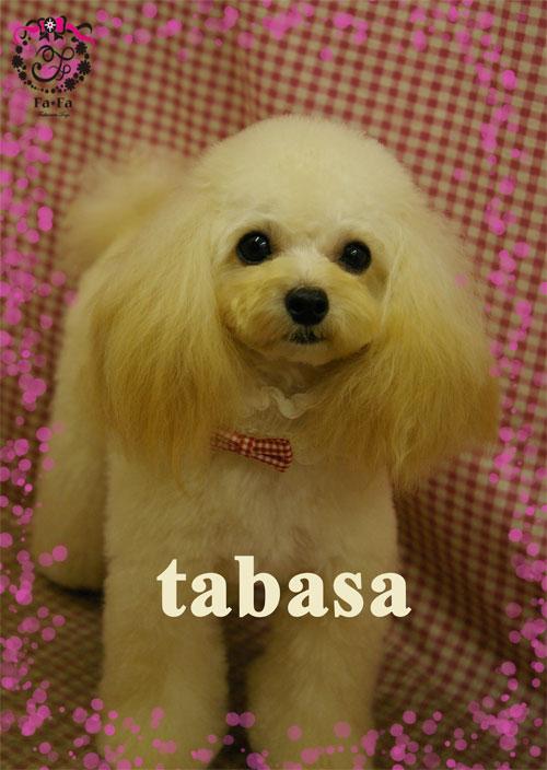 タバサちゃん