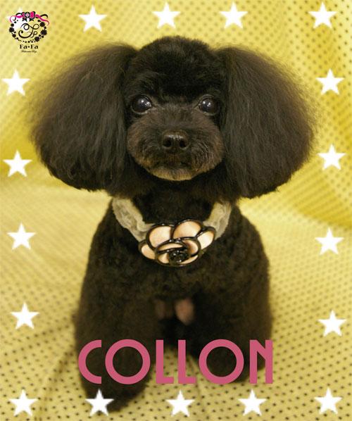 コロンちゃん