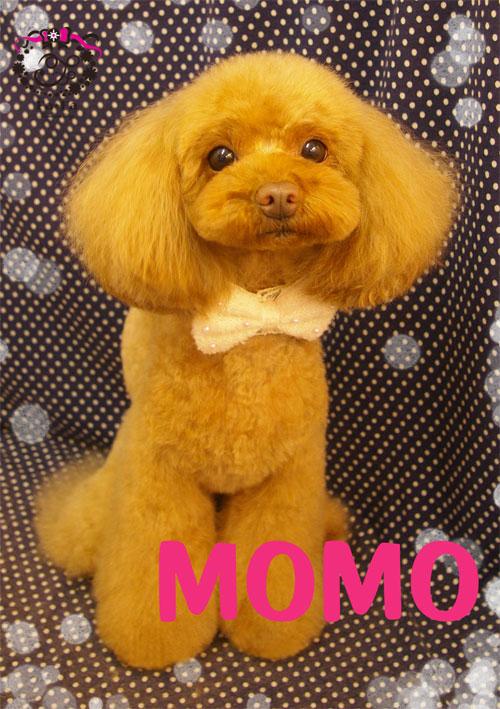 MOMOちゃん2