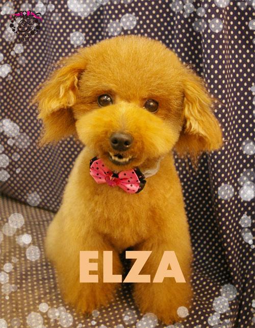 エルザちゃん