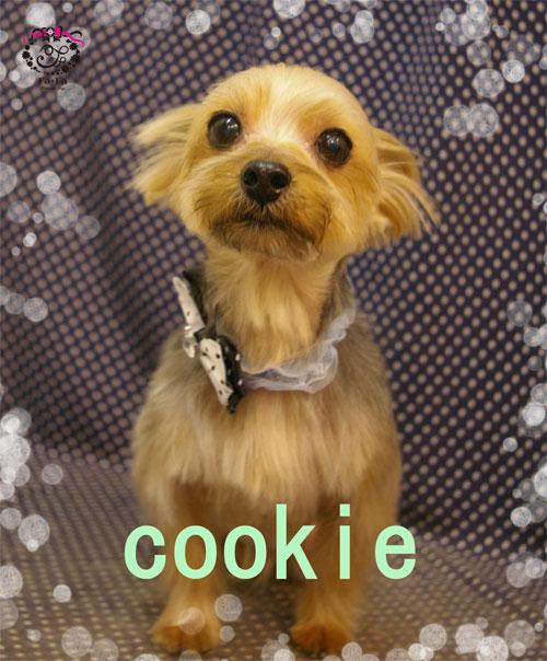 クッキーくん