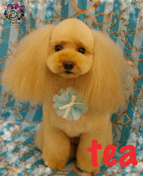 teaちゃん