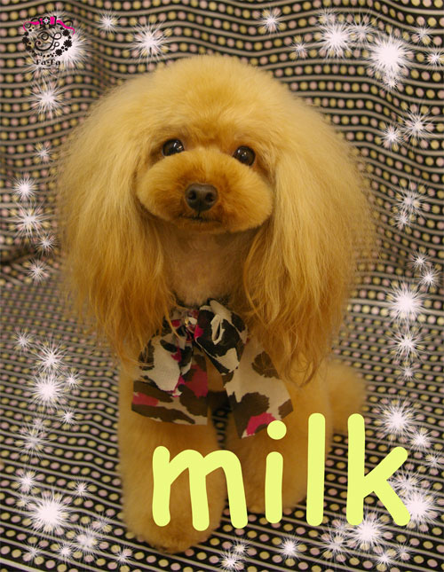 ミルクちゃん