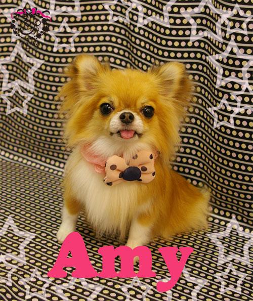 エイミーちゃん