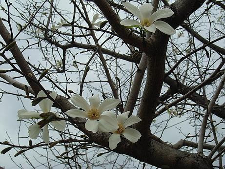 桜以外も、キレイです。