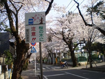桜注意書き
