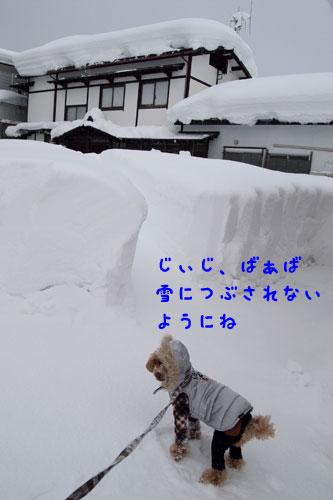 0113y-3.jpg
