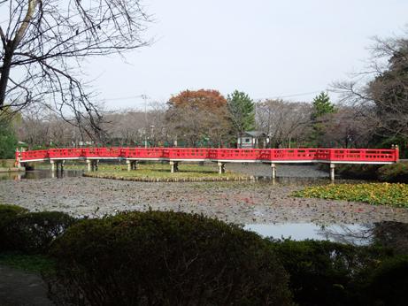 菖蒲池と八橋