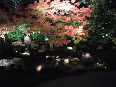 高台寺ライトアップ3