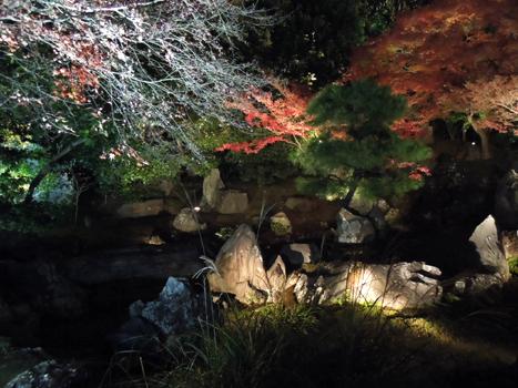 高台寺ライトアップ4