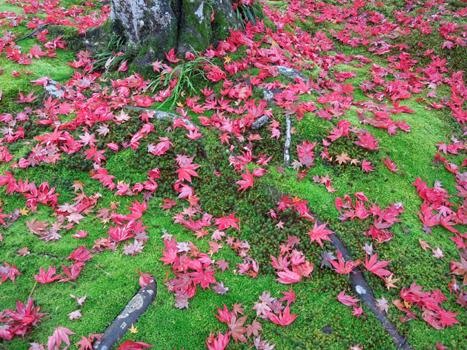 宝厳院散り紅葉