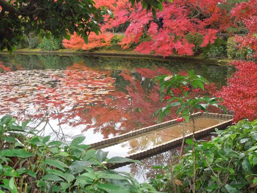 鏡容池の紅葉