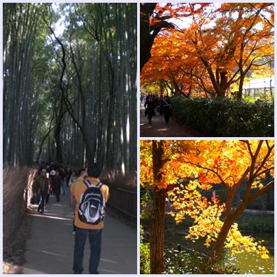竹林への道と紅葉