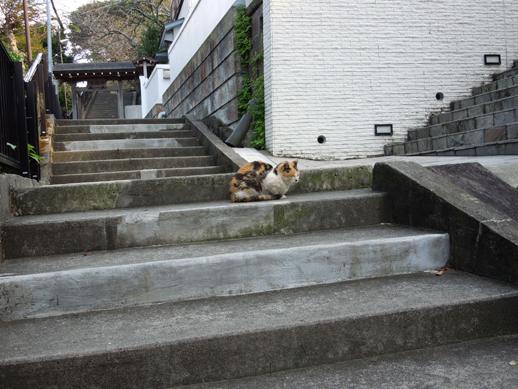 成就院への登り階段と猫