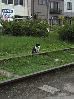 線路に猫ちゃん