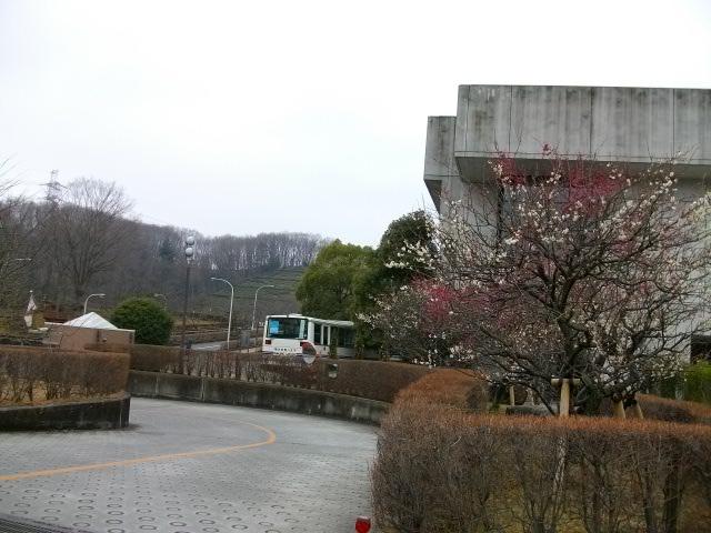 nanako卒業式 012