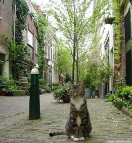 猫ちゃん散歩002