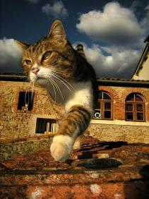 猫ちゃん散歩