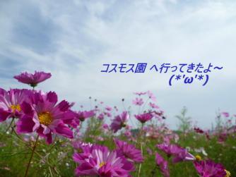 P1000446.jpg