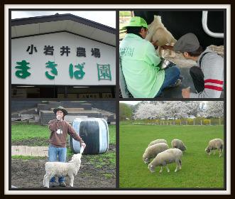 小岩井牧場4