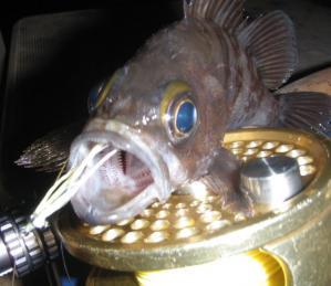 fishingnuts