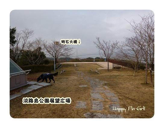 P1000329-1.jpg