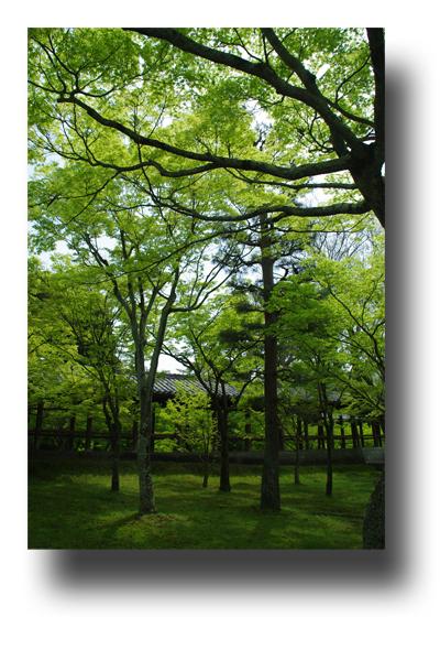 東福寺120404