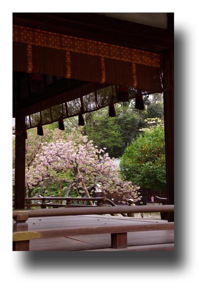 平野神社120406