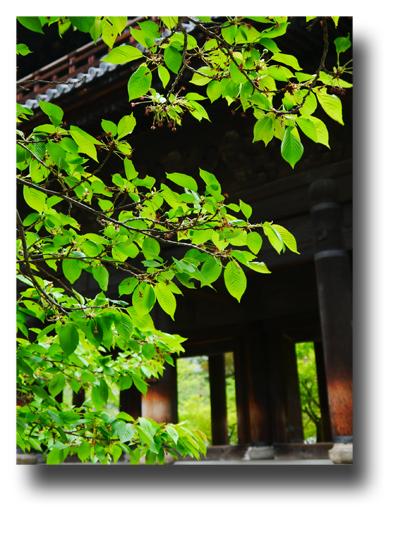 南禅寺120505