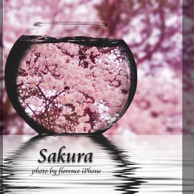 桜130301_edited-1