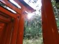 伏見稲荷 (5)