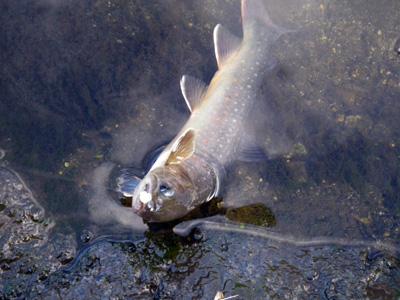 11FirstFish.jpg