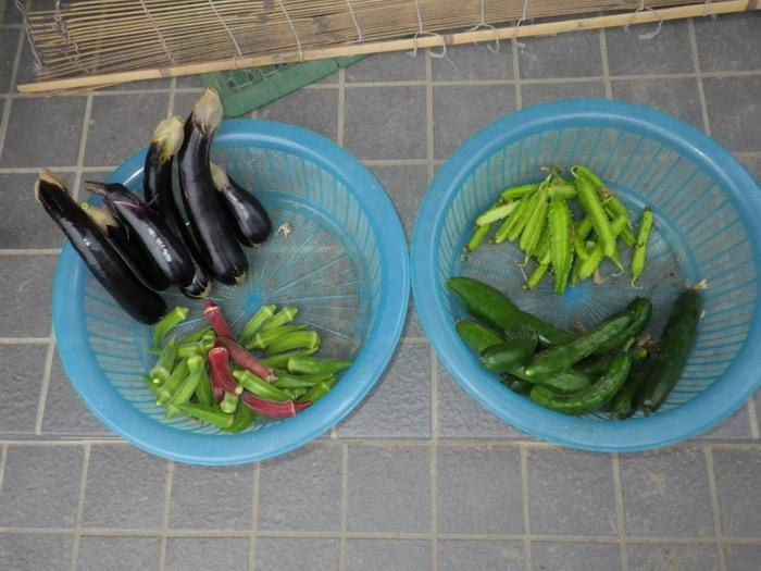 収穫14_09_19
