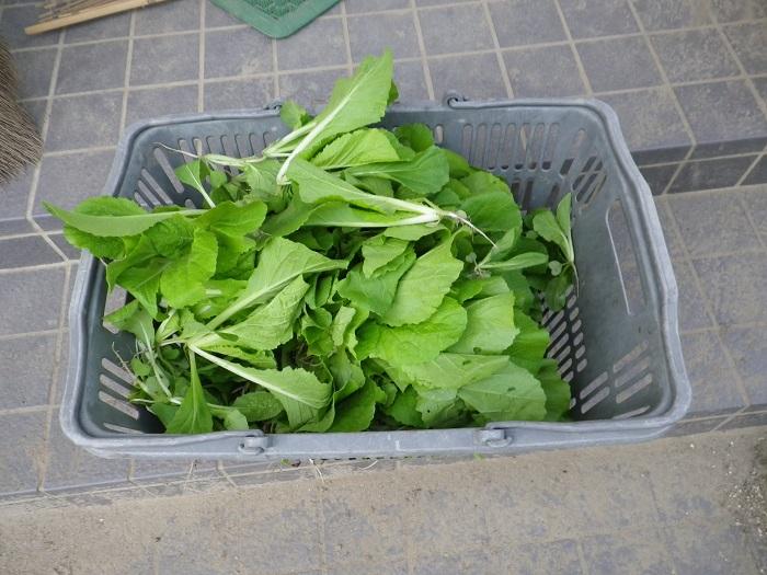 白菜2_14_09_20