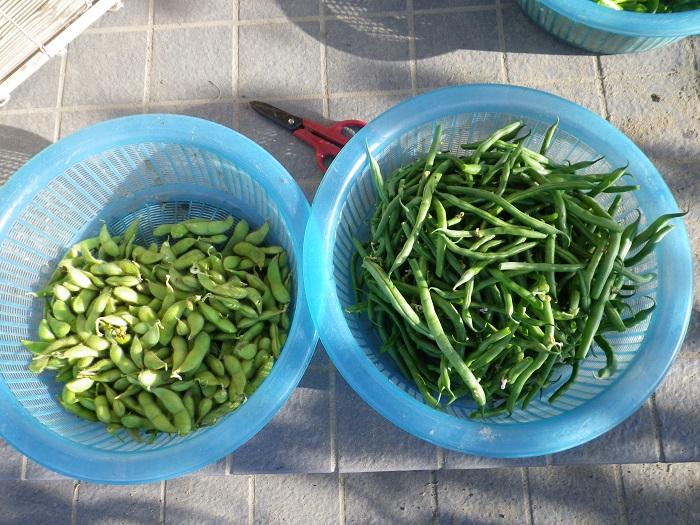 収穫2_14_09_21