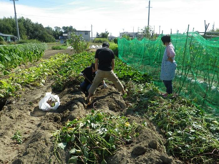 サツマイモ掘り2_14_09_21