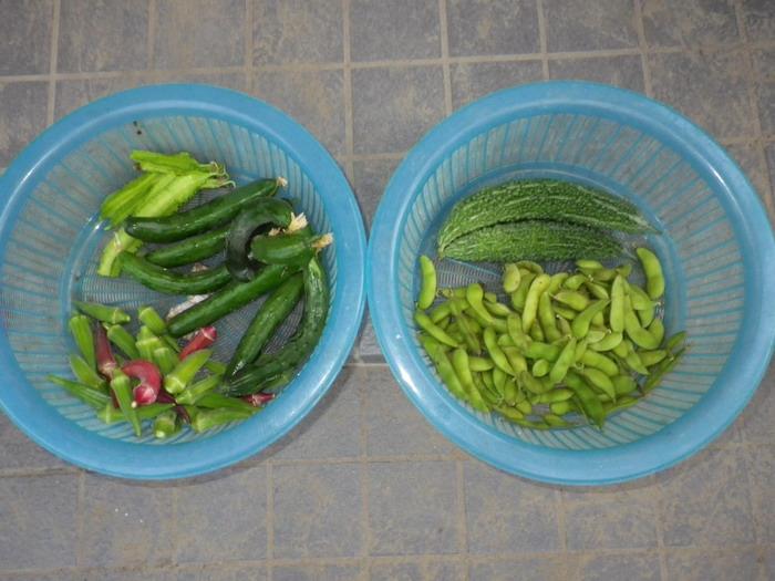 収穫14_09_22