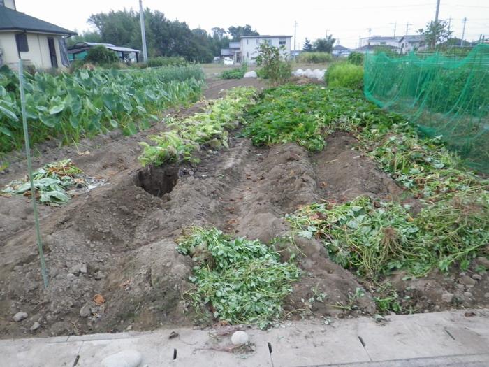 サツマイモなど14_09_22