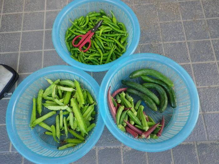収穫14_09_26