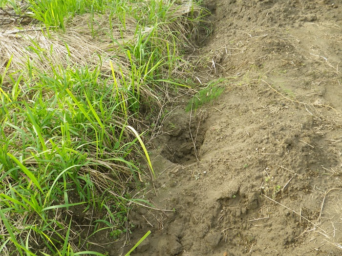 溝掘り前14_09_27