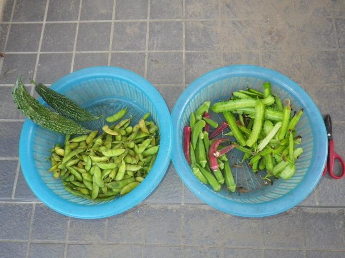 収穫14_09_29